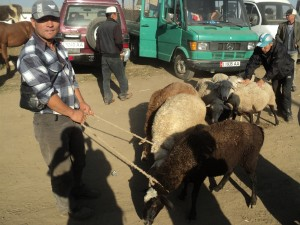 Karakol , sunday animal market