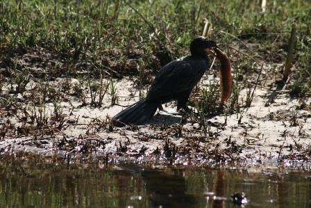 Botswana 2013 p (82)