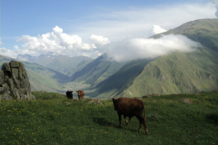 07-Kazbegi-trekking-99