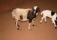 guinea-con-128