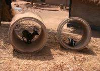 guinea-con-6