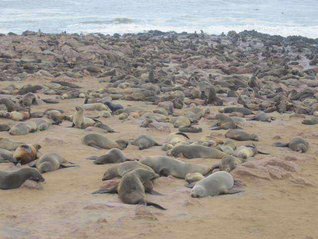 38 Cape Cross foka kolonia (7)
