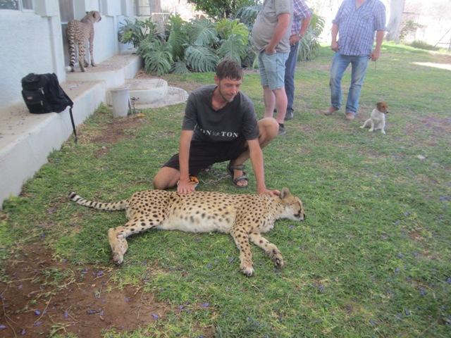 52 Cheeta farm (12)