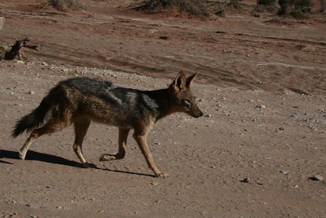 Namibia 2013 safari (139)