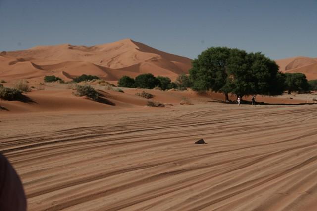 Namibia 2013 safari (157)