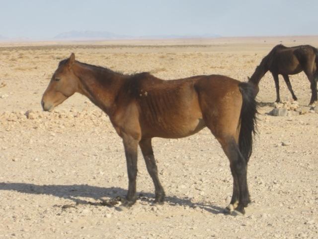 16 Garub lovak (5)