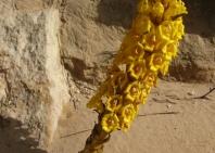 10-desert-life-5