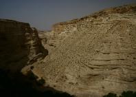 izrael-fo-foto-javallatok-6