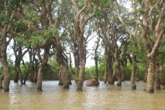 Kambodzsa-Angkor-p-2018-dec-325
