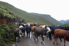 Lesotho-125