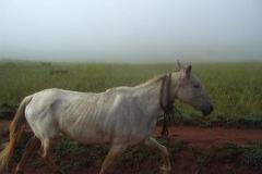 Lesotho-702