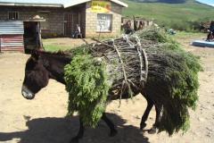 Lesotho-850