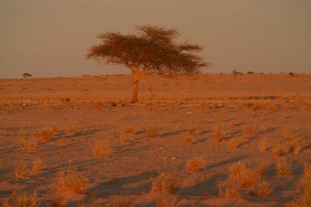 13-Mauritania-érk-63