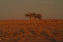 13-Mauritania-érk-59