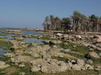 03_wadi_arabiana_shaab-107