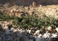 04_sinkhole_wadi_tiwi-60