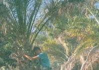 06_wadi_bani_khalid-30
