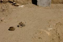 05-Wakhan-area-84
