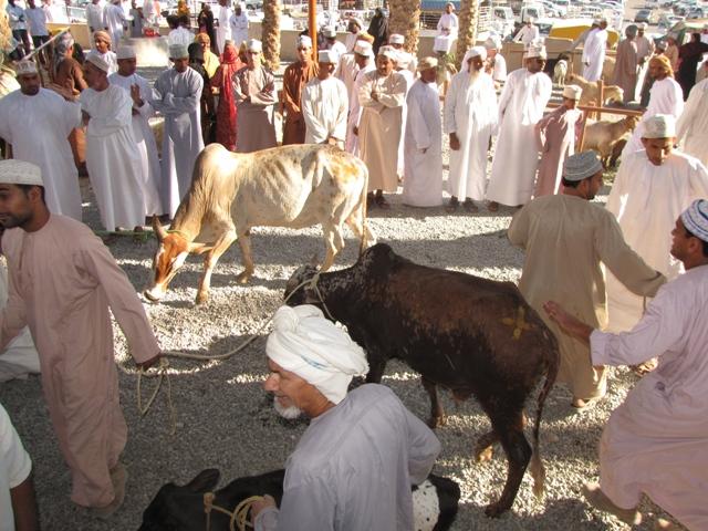 Nizwa állatpiac, Omán