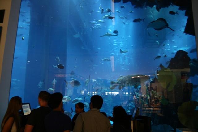 Dubai mall, akvárium