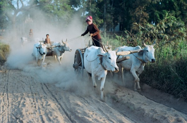 Kambodzsa - életkép