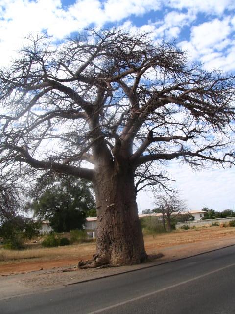 Masvingo 001