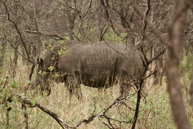 Zimbabwe 2013 (37)